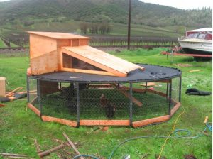 An upcycled repurposed trampoline being used as a hen coop.